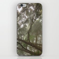 Misty Forest Branchscape iPhone & iPod Skin