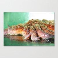 Sunflower Sea Star Canvas Print