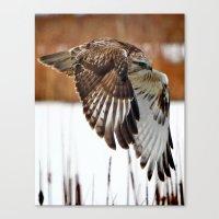 Rough-legged Hawk Canvas Print