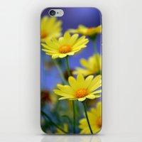 Yellow Daisies Blues iPhone & iPod Skin