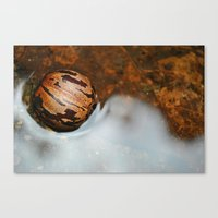 Shell Swimming Canvas Print