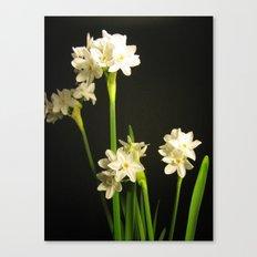 Paperwhites Canvas Print