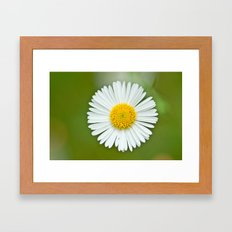 One little Daisy 184 Framed Art Print