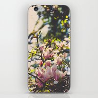 Magnolias In Spring iPhone & iPod Skin