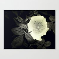 Canvas Print featuring Black and White Flower by SmallIslandInTheSun