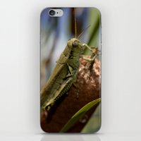 Grasshopper  2 iPhone & iPod Skin