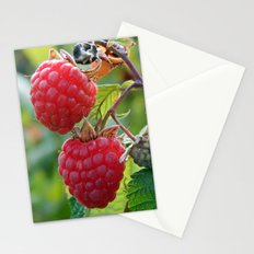 Raspberries Ready for Harvest Stationery Cards