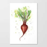 Red Beet Watercolor | Ve… Canvas Print