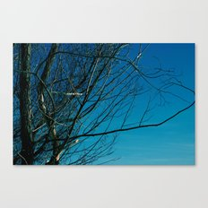 The Norwegian Trees Canvas Print