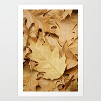 Brown Fallen Leaves Art Print
