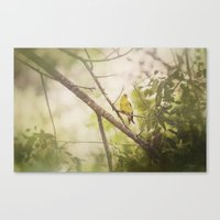 Summer Finch Canvas Print