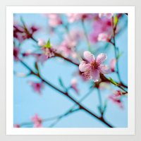 Pink on Blue Art Print