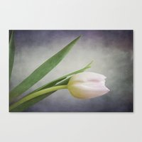 Sweet Blush Canvas Print