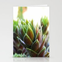 Tropical Colors Stationery Cards
