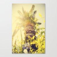 Underneath a California Palm Tree Canvas Print
