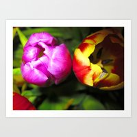 Pink and Red and Yellow Tulips Art Print