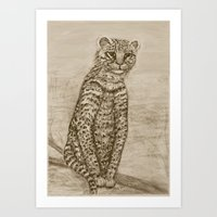 Ocelot Watching, by Ave Hurley Art Print