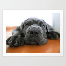 My dog, a Mastino Napoletano puppy, when is bored! Art Print