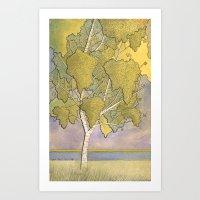 Birch 1 Art Print