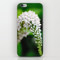 Spring has Bloomed iPhone & iPod Skin