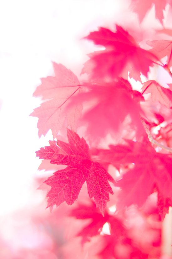 pink on white Art Print