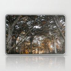 Golden Light Through The Trees Laptop & iPad Skin