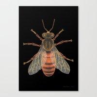 Bee (Abeille) Canvas Print