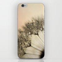 Peach & Dandy iPhone & iPod Skin