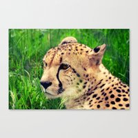 these beautiful eyes Canvas Print