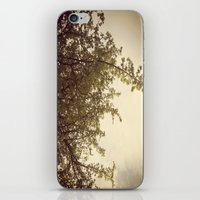 Sunlight & Branches iPhone & iPod Skin