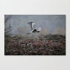 Blue Heron in the Rain  Canvas Print