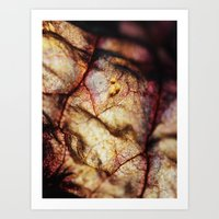 Colorful Decay Art Print