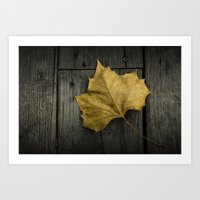 Photograph of a Fallen Sycamore Leaf on a Gray Wooden Deck Art Print