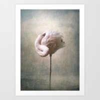 Sleeping Flamingo  Art Print