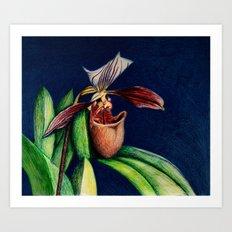 Magnificent Orchid  Art Print