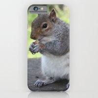iPhone & iPod Case featuring Squirrel by Caz Haggar