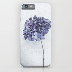 Dried Blue Hydrangea iPhone 6 Slim Case