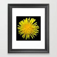 A Dandy Dandelion Framed Art Print