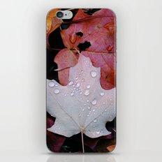 Sprinkle Leaf iPhone & iPod Skin