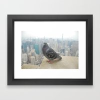 New York Pigeons Framed Art Print