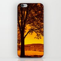 For the Love of Orange iPhone & iPod Skin