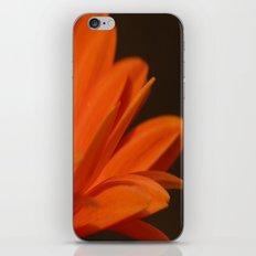 Orange Petals iPhone & iPod Skin