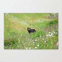 Pretty Bear Canvas Print