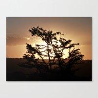 Sunset Through Acacia Tr… Canvas Print