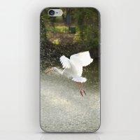 White Ibis on Takeoff iPhone & iPod Skin