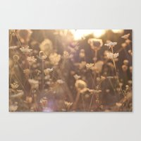 Sunflare II Canvas Print