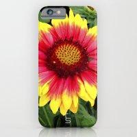 Sunset Blossom iPhone 6 Slim Case