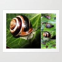 Snail Collage Art Print