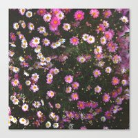 Pink Marguerite Canvas Print
