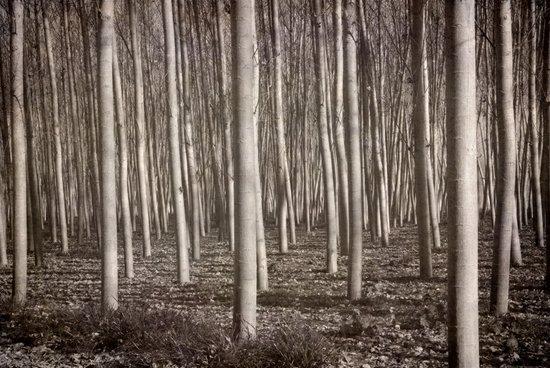 """Straight trees"" Art Print"